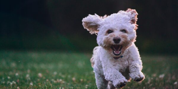 Grass seeds and the risk to dogs