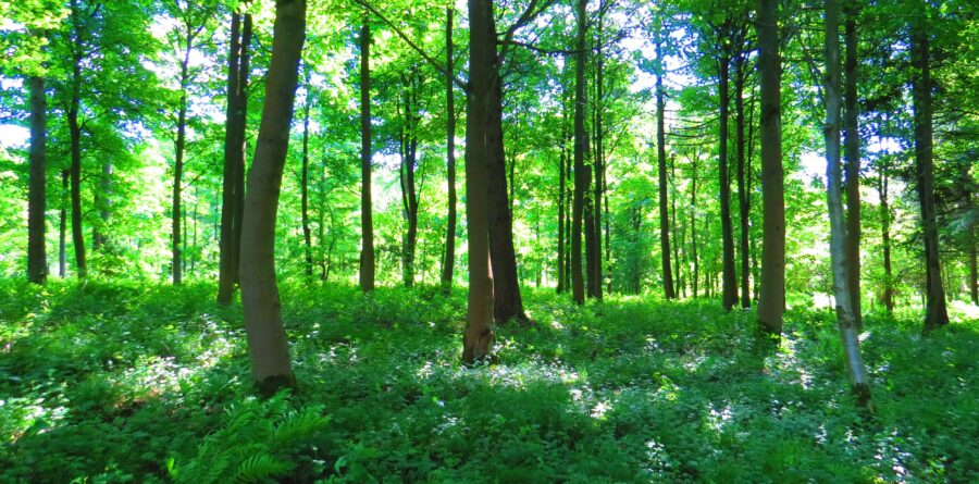 10% of flights donated to the woodland trust